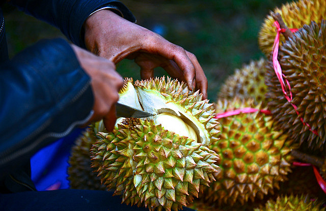 2.1381399398.one-of-many-durians-that-were-eaten