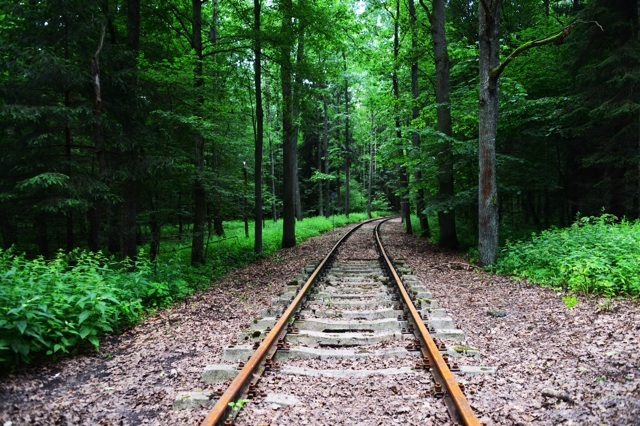 1.1372636800.railway-track-in-the-forest