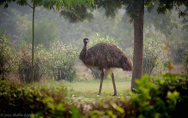 7.1416328716.emu